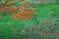紅葉と緑の絨毯