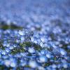 青と白の絨毯
