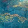 法多山の紅葉 3