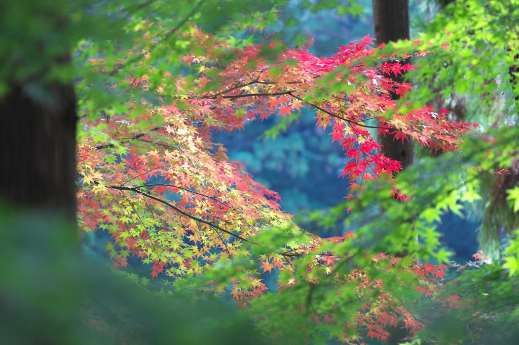 法多山の紅葉