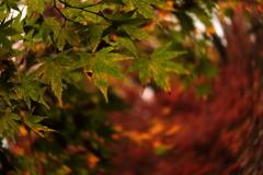秋の匂いがする