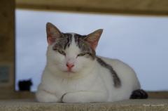 コンドイ浜の猫