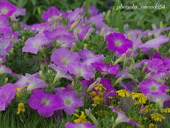 さくらの山公園に咲く花