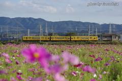 主役は黄色い電車