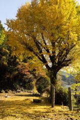 徳川発祥の地「松平の里」