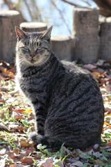 公園に住んでいる猫