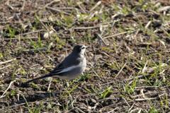 今日出会った鳥4