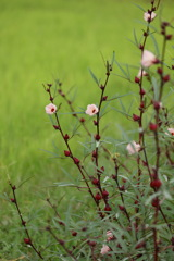 畑の隅に咲く花