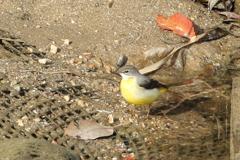 今日出会った鳥