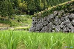 棚田の石垣2