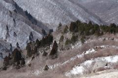 早春の山1