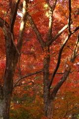 湖東の紅葉