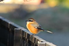 今日出会った鳥1