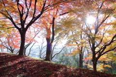 すがすがしい秋の朝