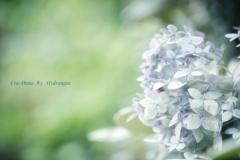 Ura-Hana ♯3  Hydrangea
