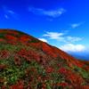栗駒山から (山頂の秋)