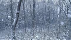 冬森へようこそ~