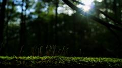 深い森の小さな集い