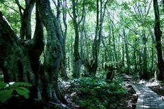 ようこそ魔界の森へ