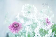 - La  beaute -  6  Fleurs