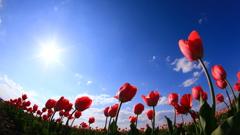 春の楽団♪
