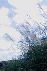 - 秋愁の風 -