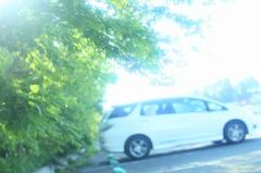 駐車場のグリーン♪
