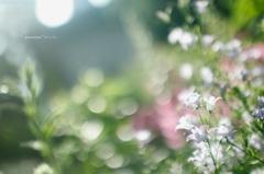 Shining flowers