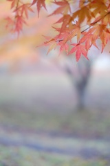 晩秋の色と・・・