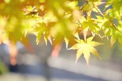 秋の日。キラキラ星☆