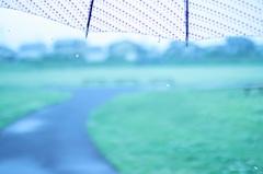 傘と雨と・・・