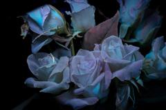 紫外線励起蛍光撮影 薔薇