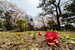 桜 名古屋城