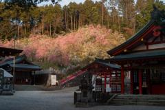 夕陽に照らされる大縣神社
