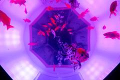 アートアクアリウム展