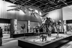 Toyohashi Museum of Natural History