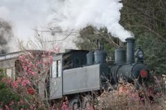 早咲きの梅園を行く汽車