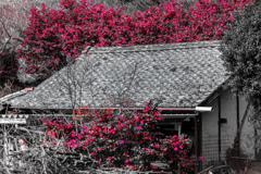 山茶花の宿
