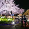 夜桜と初めてお目にかかるガードマンさん。