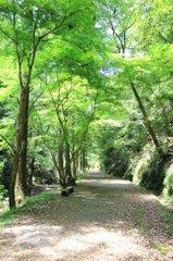 阿寺の七滝(その1)