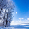 青空と霧氷防風林