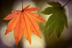 秋の色くらべ