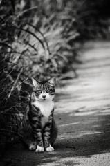Monochrome cat ⑵