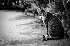 Monochrome cat ⑴