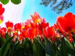 見上げれば春