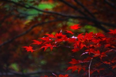 Spring colored leaves