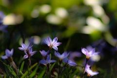 花の季節はすぐそこまで…