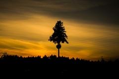 夕暮れの一本杉
