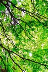 新緑の候…