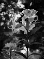 Monochrome beauty